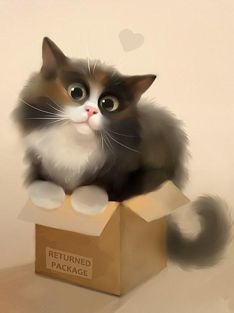 手机墙纸可爱猫咪